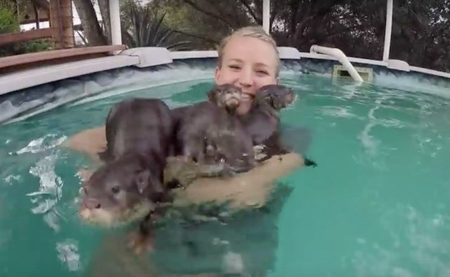 7cfea7f11 Should You Swim With Otters?   Care2 Causes