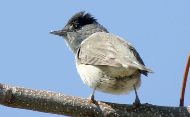 Aumento de la captura de aves canoras para Ambelopoulia en Chipre | Care2 Causas