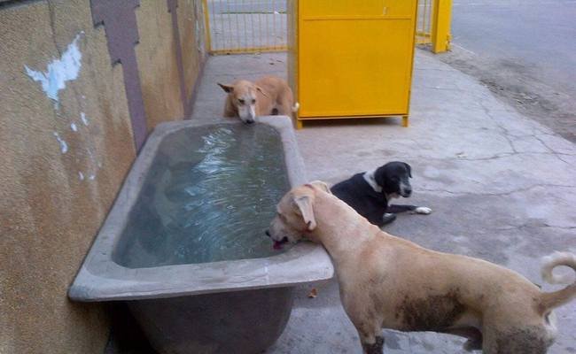 Tubs Of Water Save Strays From Summer Scorcher