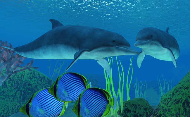 Image result for dolphins chatting