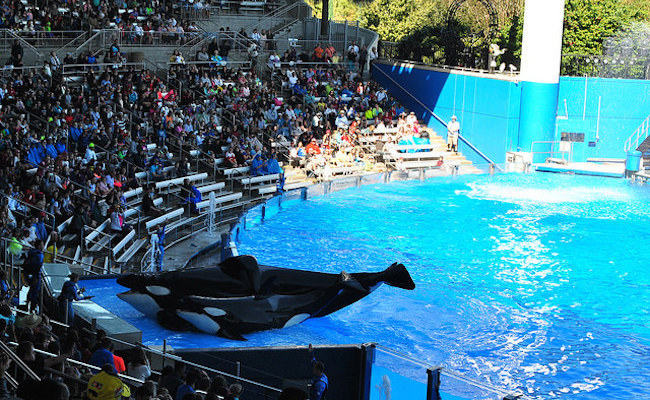 SeaWorld killer whale at the center of