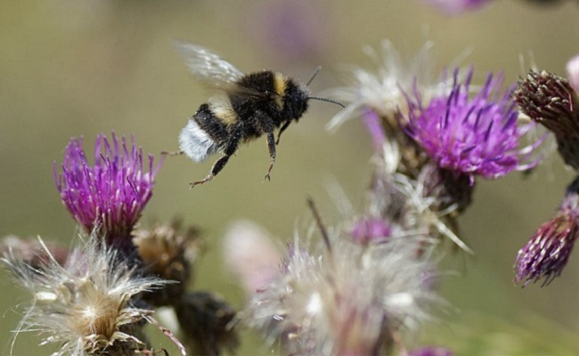 What are some facts about bumblebees?