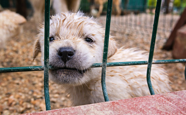 100 Worst Puppy Mills In The Us Exposed Care2 Causes