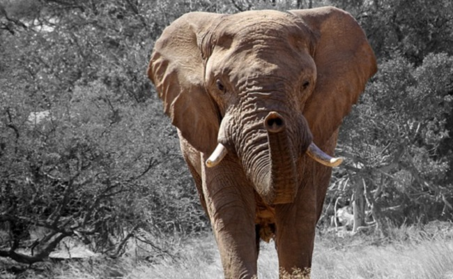 Karma? Another Trophy Hunter Has Been Killed By An Elephant | Care2 Causes