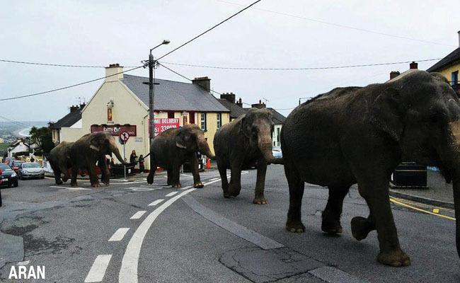 Success! Ireland Bans Wild Animals In Circuses   Care2 Causes