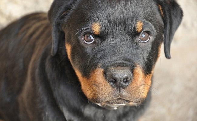 U Haul Billionaire Finally Reimburses Dog Rescue For 15300 Vet