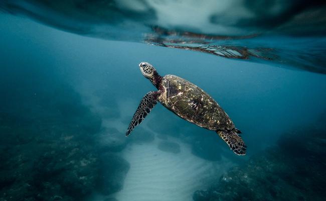 Do We Need An International Agreement To Halt Mass Extinction