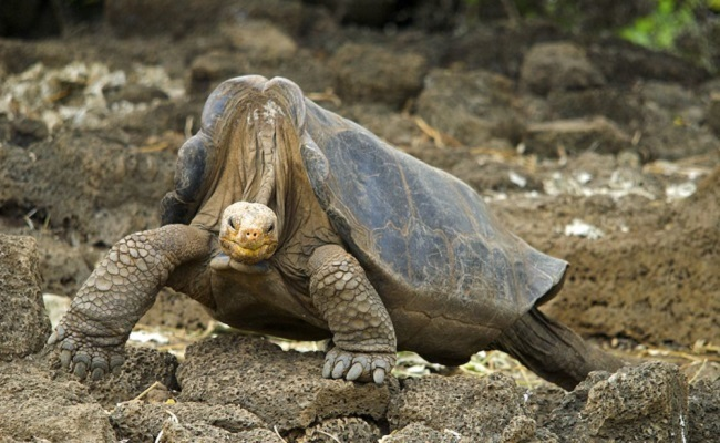 10 animals that have gone extinct in the last 100 years care2 causes