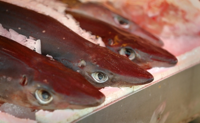 British Fast Food Fish Shops Are Serving up Endangered Shark Meat | Care2 Causes