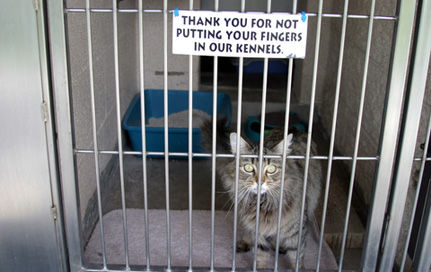 Speak Out For Animals in Shelters