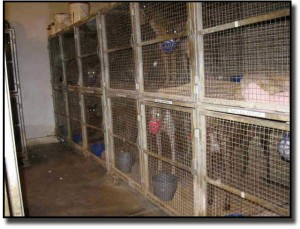 Stacked cages at Tucson Greyhound Park