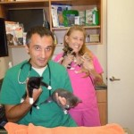 The kittens visit the veterinary office.
