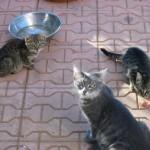 Avsallar cats r.i.p. (9)