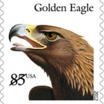 golden-eagle-2012-birds-of-prey