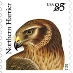 northern-harrier-2012-birds-of-prey