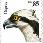 osprey-2012-birds-of-prey
