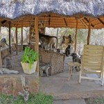 Yes, the baboons do take over the gazebo from time to time.