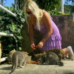 Here is Manuela feeding a group of cats.