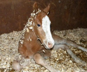 Foals that come into the rescue program have a bright future ahead of them with loving adoptive families.