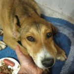 Here is the puppy Manuela carried down the beach to safety.  This little girl is now on her way to a magical new life.
