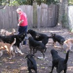 Brian with many dogs