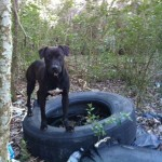 Here's Theo while still hiding in the woods at the dump site.  He is now safe.