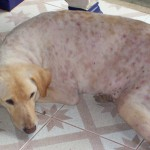 Noel was dumped on the street, hit by car and spent 11 days in coma. She is now recovering from a skin infection.