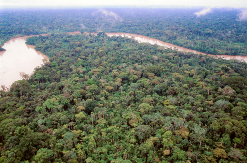 Amazon, trees, adaptation, climate change