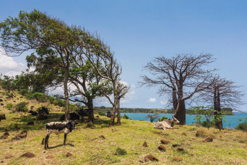 East African Coastal Forests