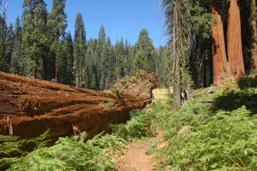 California Floristic Province forests
