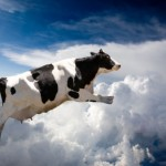 And the cow jumped over the moon...