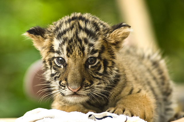 Cute Animals In The Tropical Rainforest