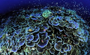 A stunning coral formation with fish, in shades of moody purple and teal.
