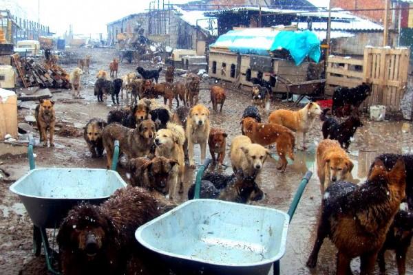 Tamara Raab & Harmony Fund Helping Abused Animals in Romania