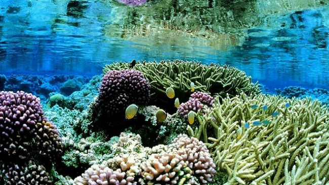 Sri Lanka coral reef