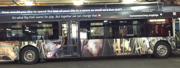 Bus wrapped with HSUS ad about pig gestation crates