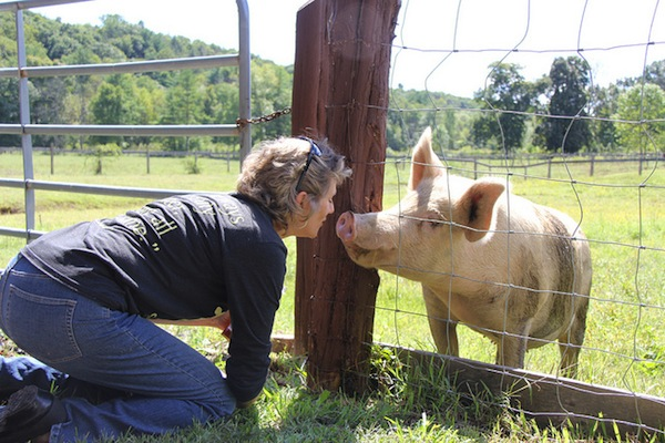 Woman meets a friendly pig through a fence