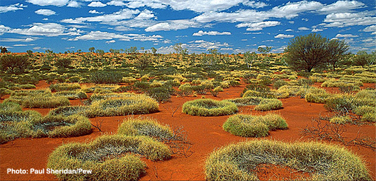 The Little Sandy Desert in western Australia, Pew photo by Paul Sheridan