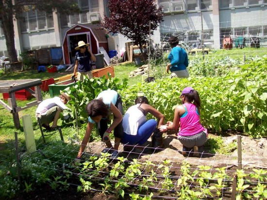 The Youth Farm school gardens NYC