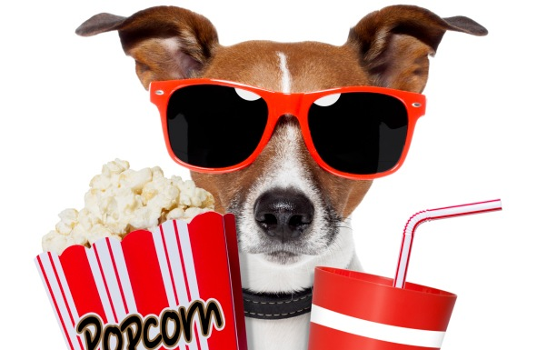 dog with hollywood sunglasses, popcorn, and drink