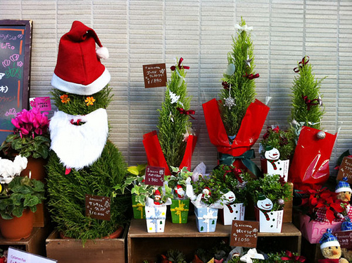 non-toxic holiday decorations potted plants