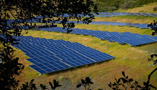 solar farm bees