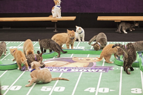 Image result for superbowl kitties