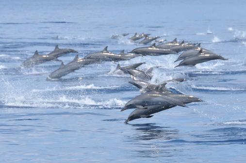 dolphin die offs