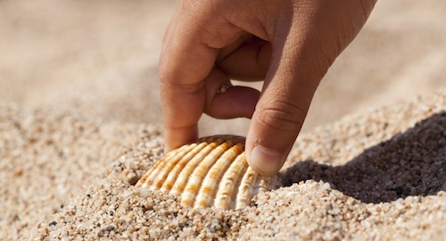 Hand picking up shell from beach