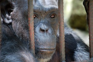 5 Reasons You Should Boycott The Zoo | Care2 Causes