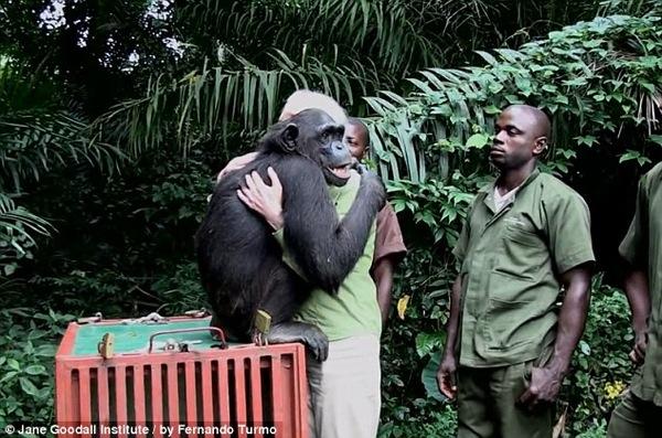 Dr Goodall shares hug with a chimp