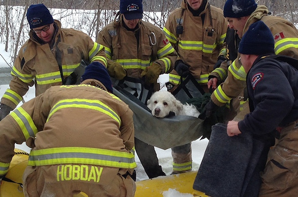 Roscoe the puppy is rescued from river