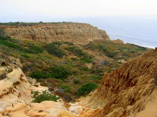 Coastal San Diego Torrey Pines State Park