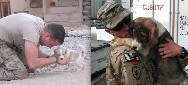 Soldiers playing with stray dogs